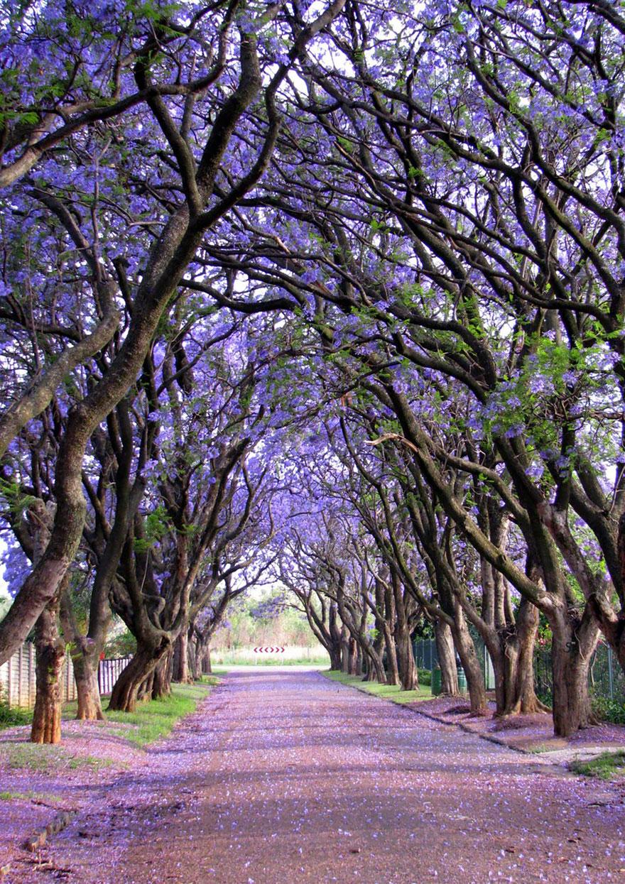 amazing-árboles-9
