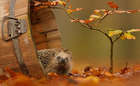 15+ Animals Enjoying The Magic Of Autumn