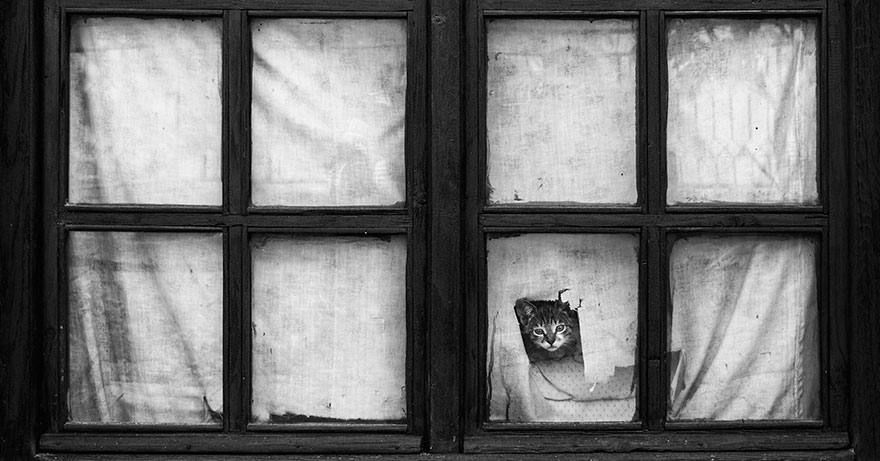 cat-waiting-window-32