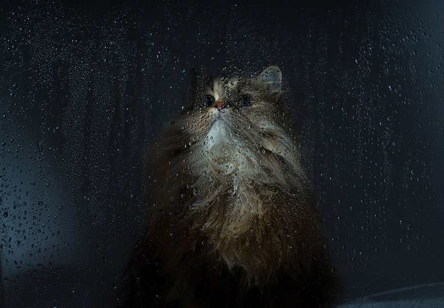 cat-waiting-window-33