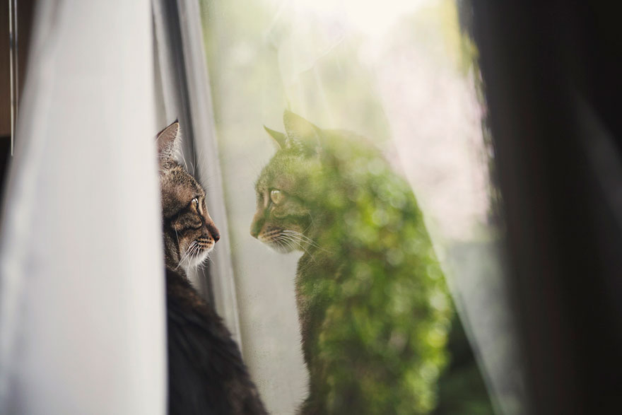 cat-waiting-window-43
