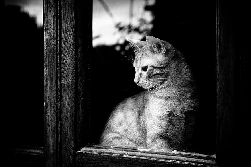 cat-waiting-window-44