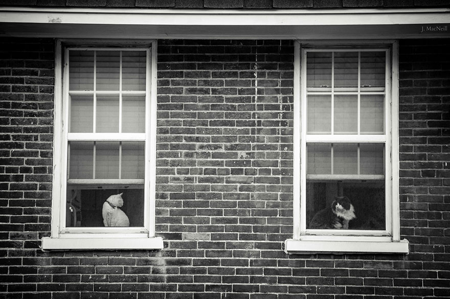 cat-waiting-window-48