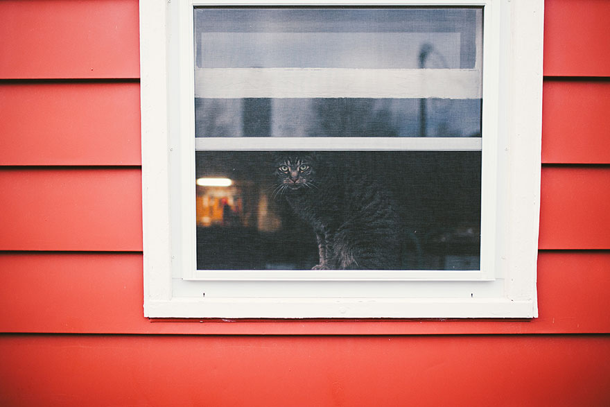cat-waiting-window-49