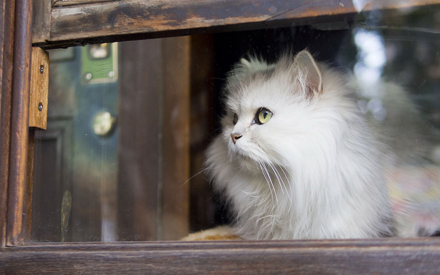 cat-waiting-window-57