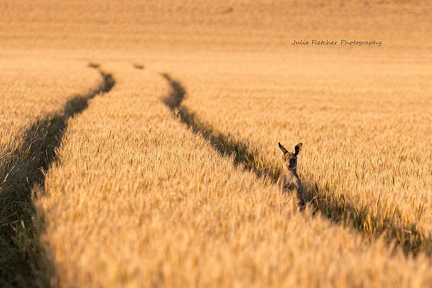 paisagem-natureza-fotografia-australia-julie-Fletcher-21