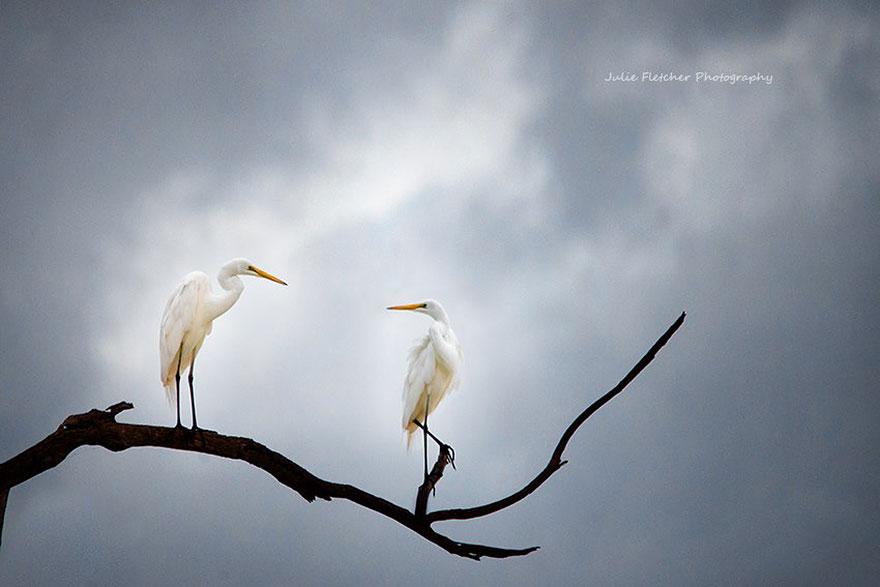 paisagem-natureza-fotografia-australia-julie-Fletcher-7