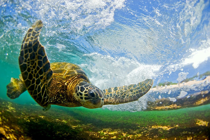 shorebreak-wave-photography-clark-little-7