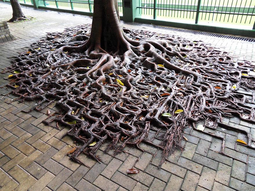 Foto Akar Pohon Menembus Dinding Beton 1