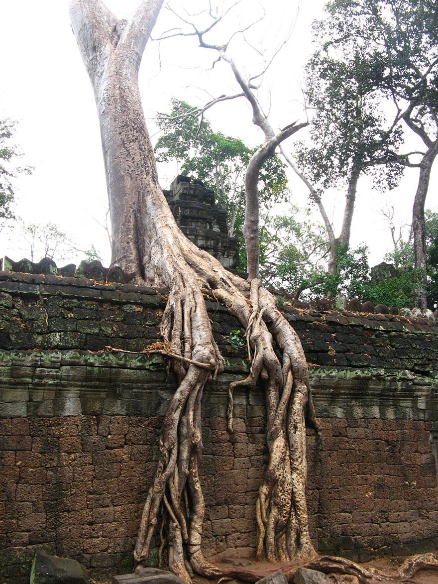 Foto Akar Pohon Menembus Dinding Beton 10
