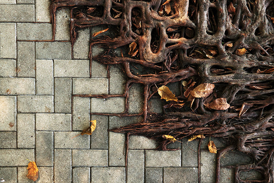 Foto Akar Pohon Menembus Dinding Beton 2