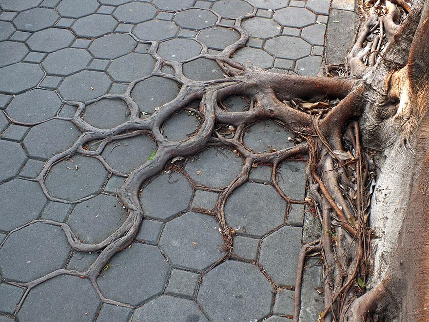 Foto Akar Pohon Menembus Dinding Beton 5