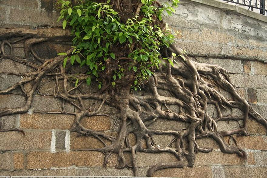 Foto Akar Pohon Menembus Dinding Beton 7