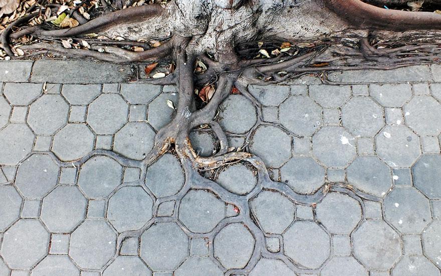 Foto Akar Pohon Menembus Dinding Beton 4