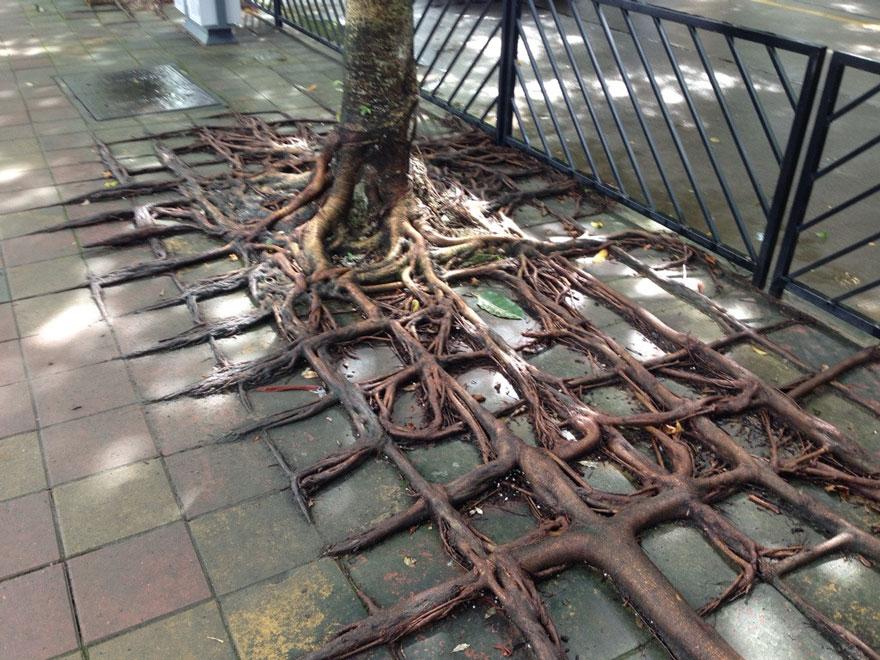 Foto Akar Pohon Menembus Dinding Beton 3