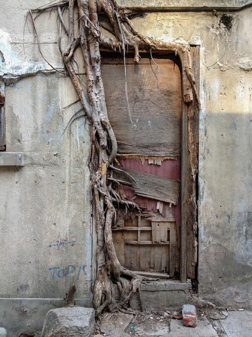 Foto Akar Pohon Menembus Dinding Beton 8