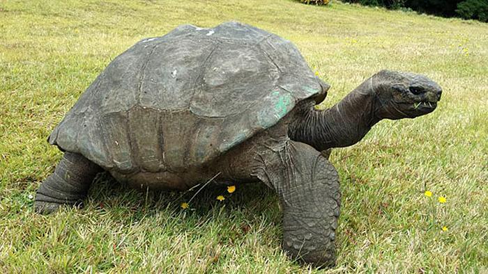 182 años de edad-tortuga-jonathan-12