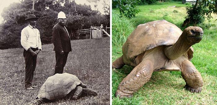 182 años de edad-tortuga-jonathan-15