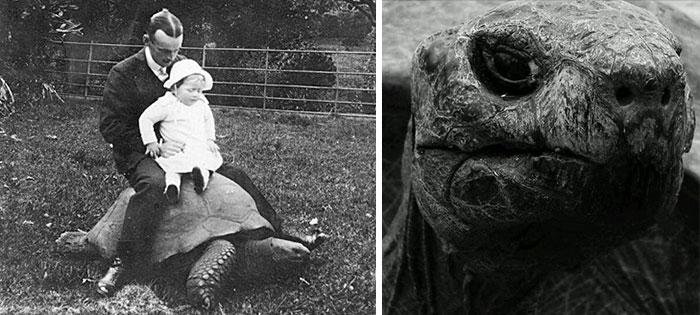 182 años de edad-tortuga-jonathan-17