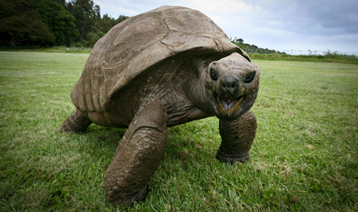 182 años de edad-tortuga-jonathan-4