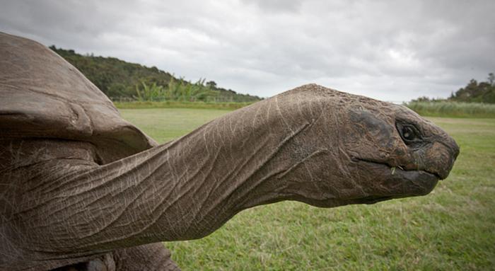 182 años de edad-tortuga-jonathan-5