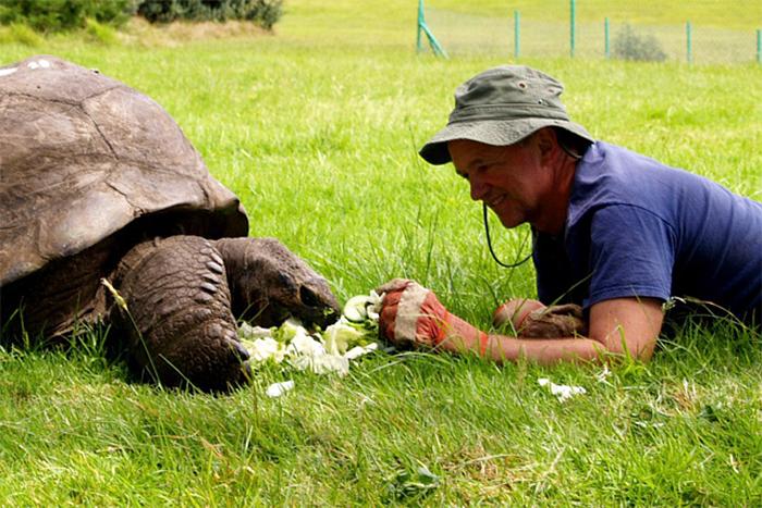 182 años de edad-tortuga-jonathan-6