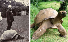 Jonathan The Tortoise Photographed In 1902 And Today