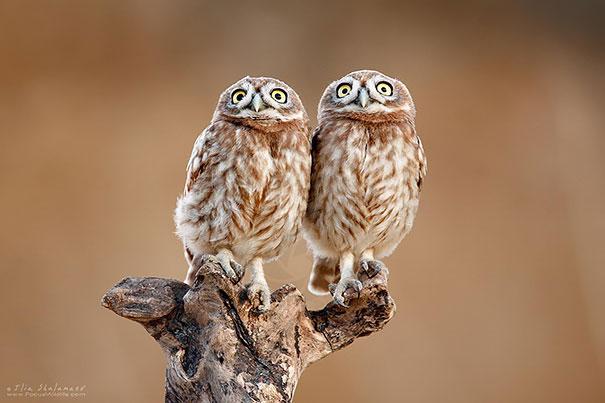 animais gêmeos-de-dois-similar-sósias-205