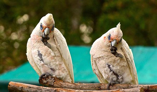 animais gêmeos-de-dois-similar-sósias-209