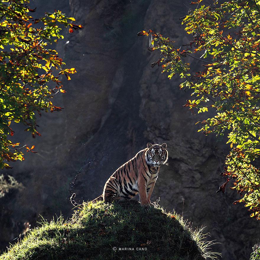 -animal-selvagem-fotografia-marina cano-13