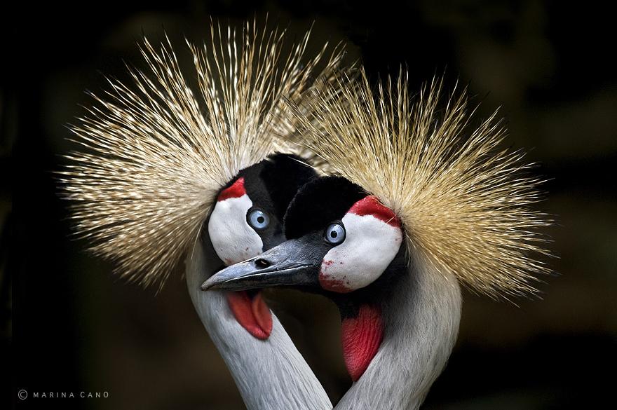 -animal-selvagem-fotografia-marina cano-16