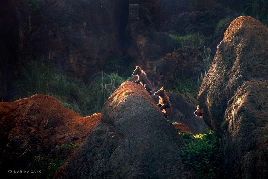 -animal-selvagem-fotografia-marina cano-19