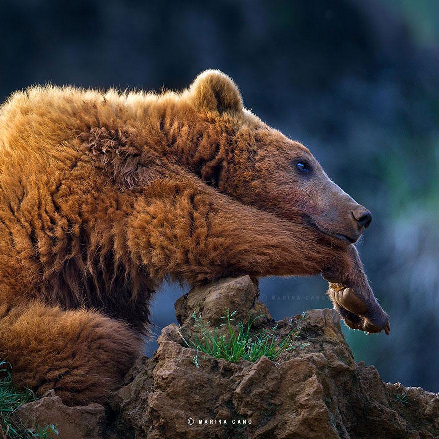 -animal-selvagem-fotografia-marina cano-2
