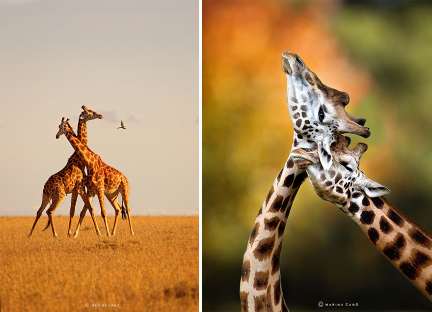 -animal-selvagem-fotografia-marina cano-4