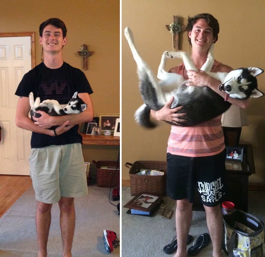 animals-before-after-growing-up-3