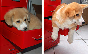 21 Before And After Photos Of Dogs Growing Up