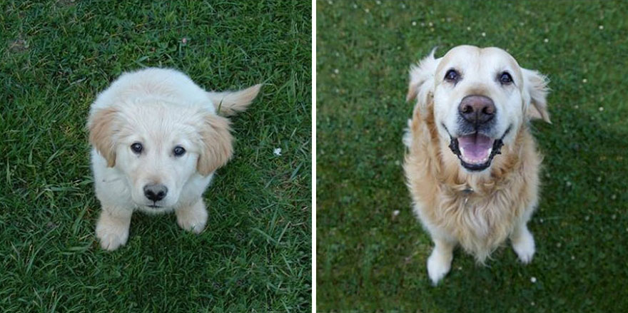 animals-before-after-then-now-16