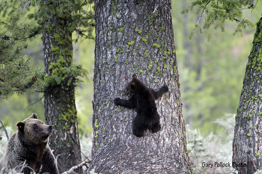 bear-photography-200