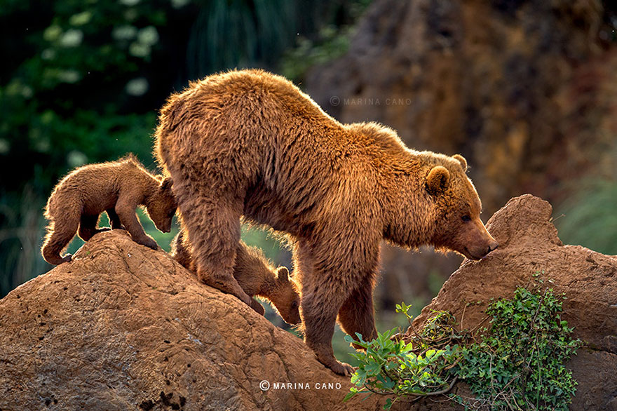 bear-photography-202