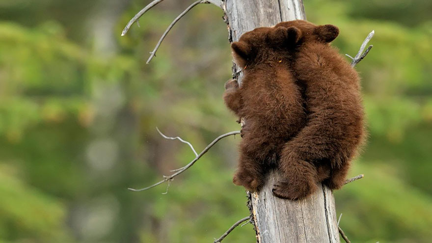 bear-photography-27