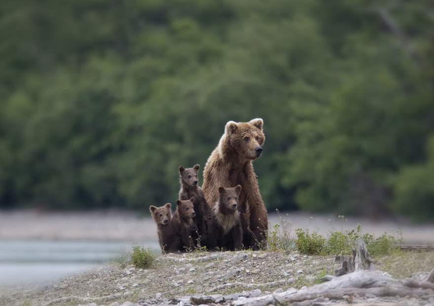 bear-photography-33