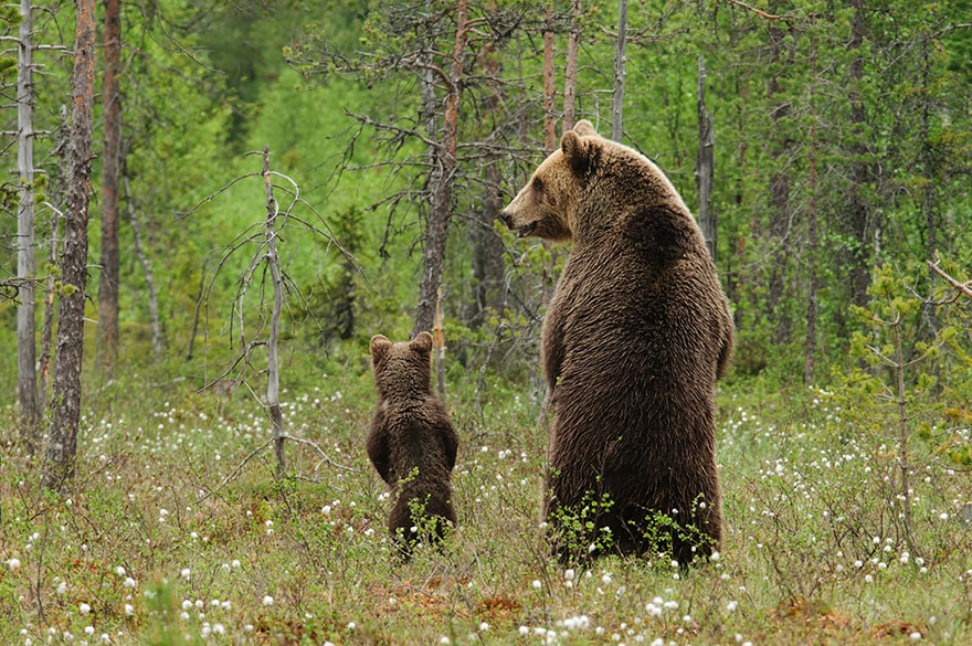 bear-photography-4