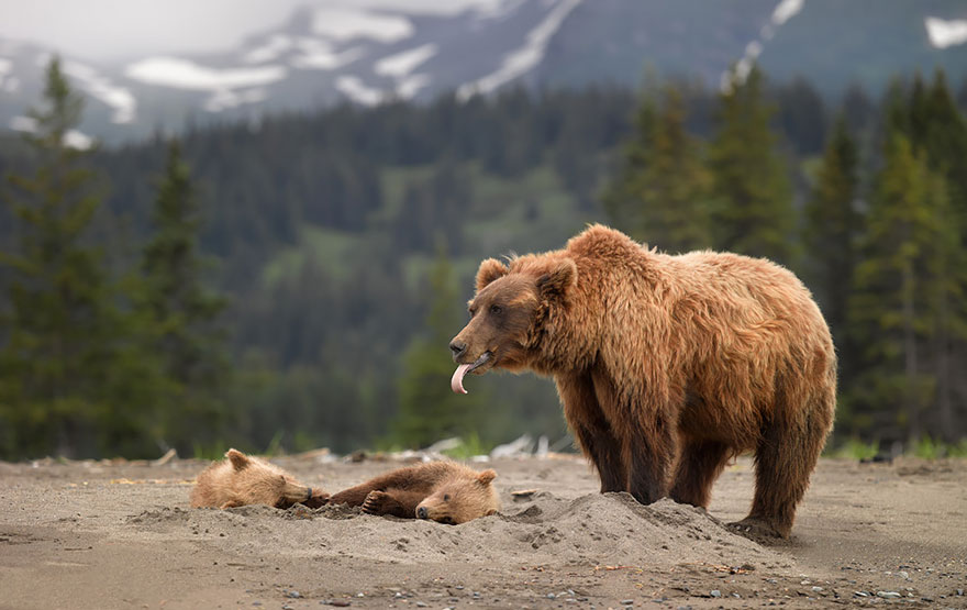 bear-photography-7