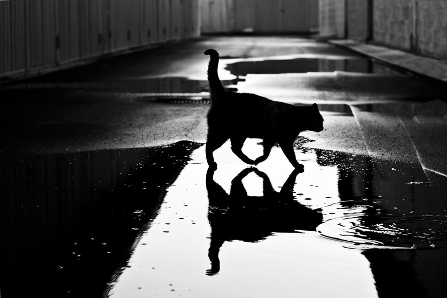 cat-black-and-white-photography-18