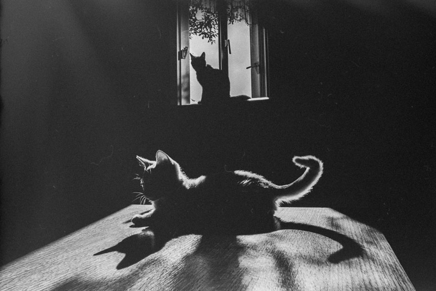 Chat alors! - Page 18 Cat-black-and-white-photography-21