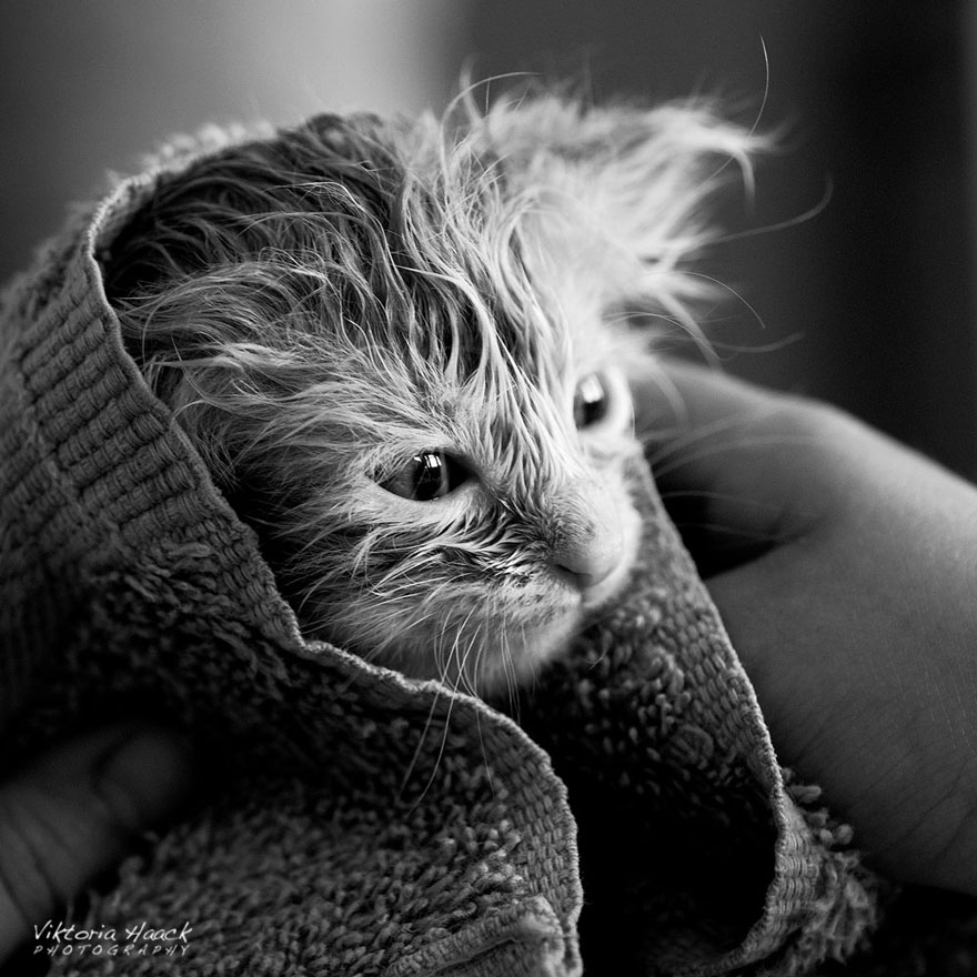 cat-black-and-white-photography-44