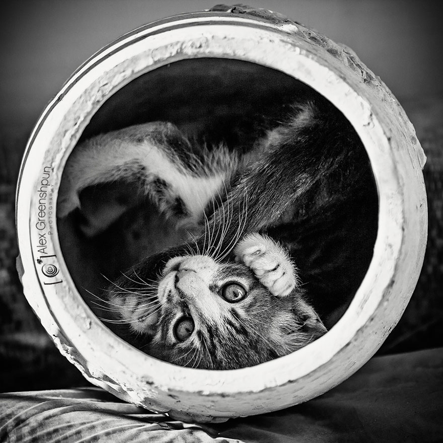 cat-black-and-white-photography-6
