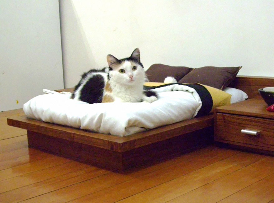 cat-furniture-112