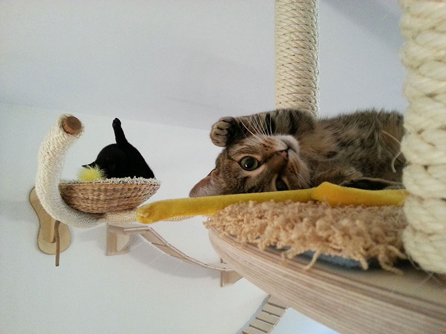 cat-furniture-creative-design-37