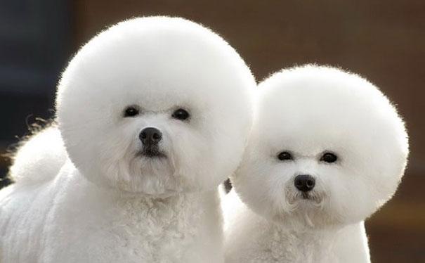 cute-animais-gêmeos-1